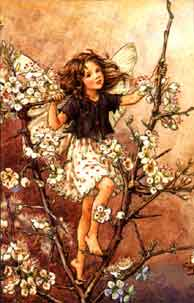 Blackthorn Fairy by Cicely Mary Barker